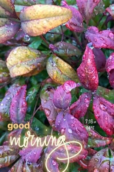 'Good Morning' Instagram Stories