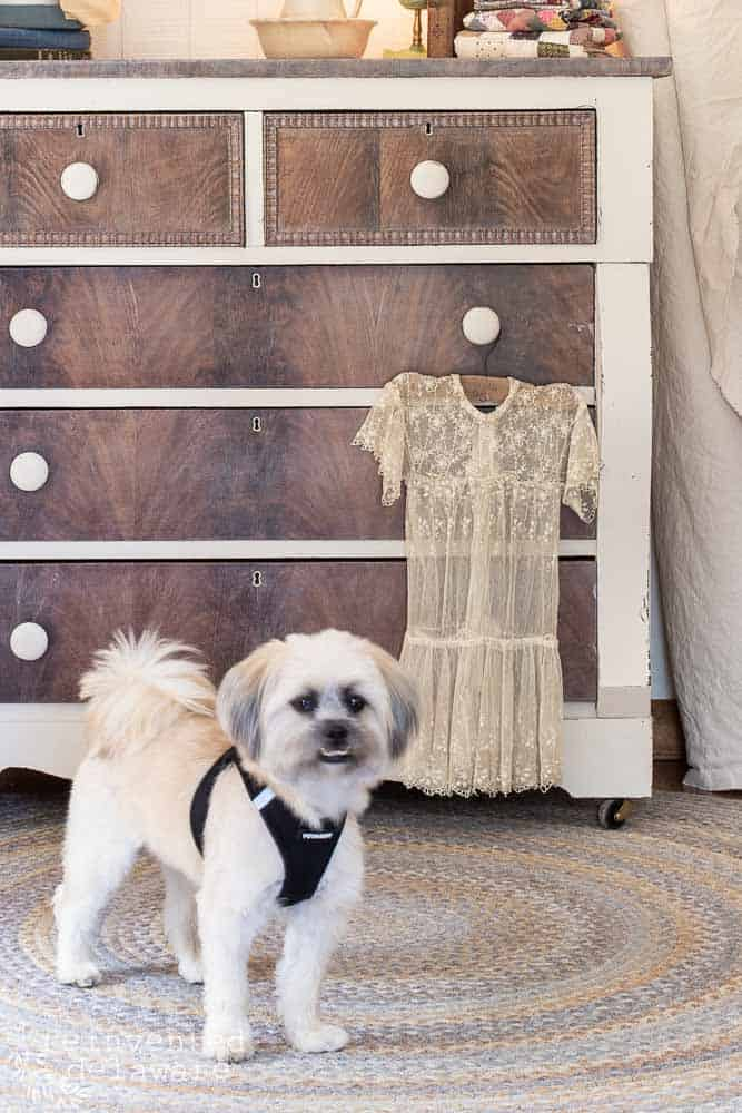 mahogany dresser makeover with small dog standing in front of it
