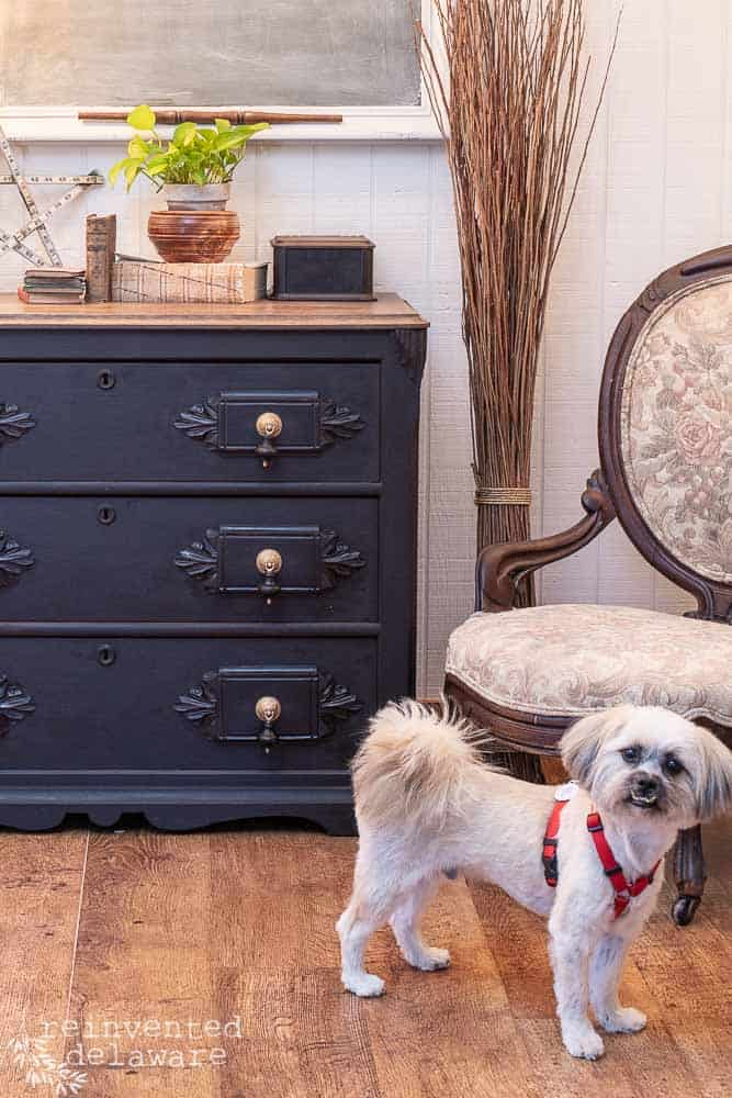 dog in picture with painted antique gentlemen's dresser after makeover